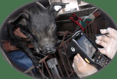 アグーブランド豚肉トレーサビリティシステム