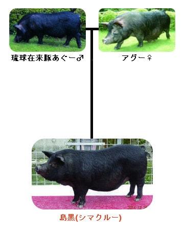 シマクルーの血統
